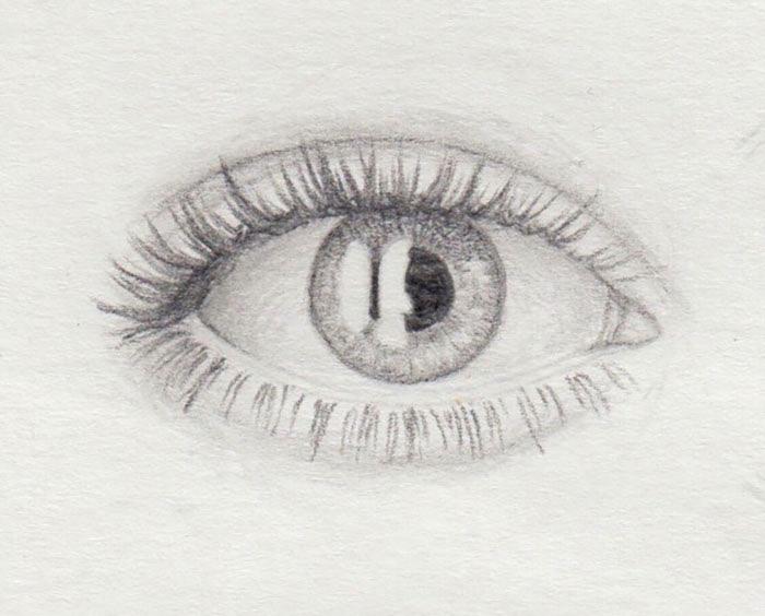 unteren Wimpernkranz zeichnen