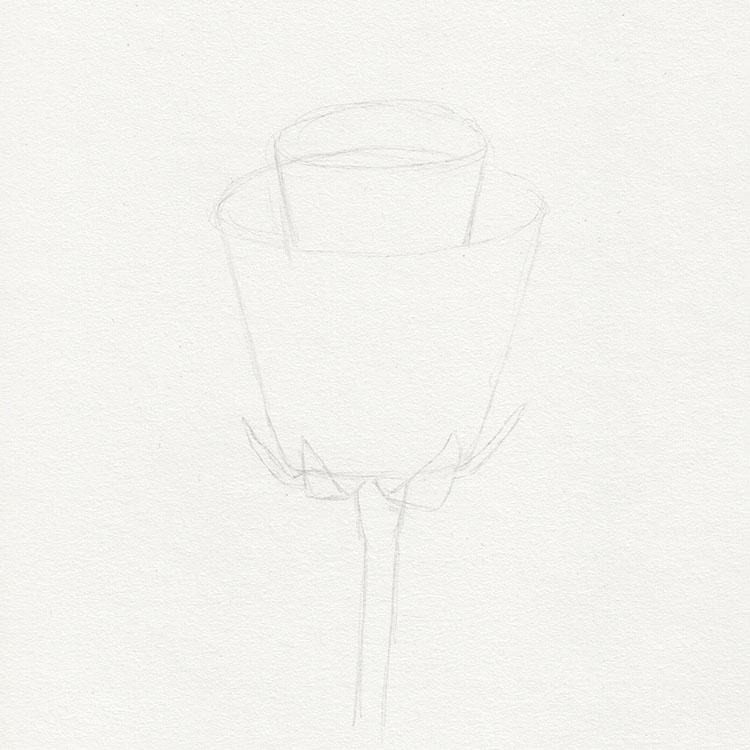 Нарисуйте розу Базовая форма