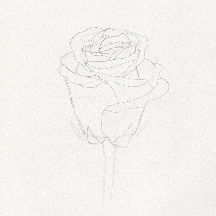 Нарисуйте эскиз розы