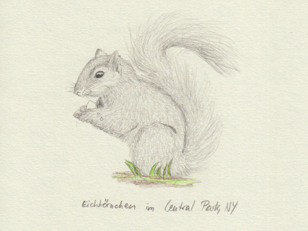 Drawing squirrel in New York