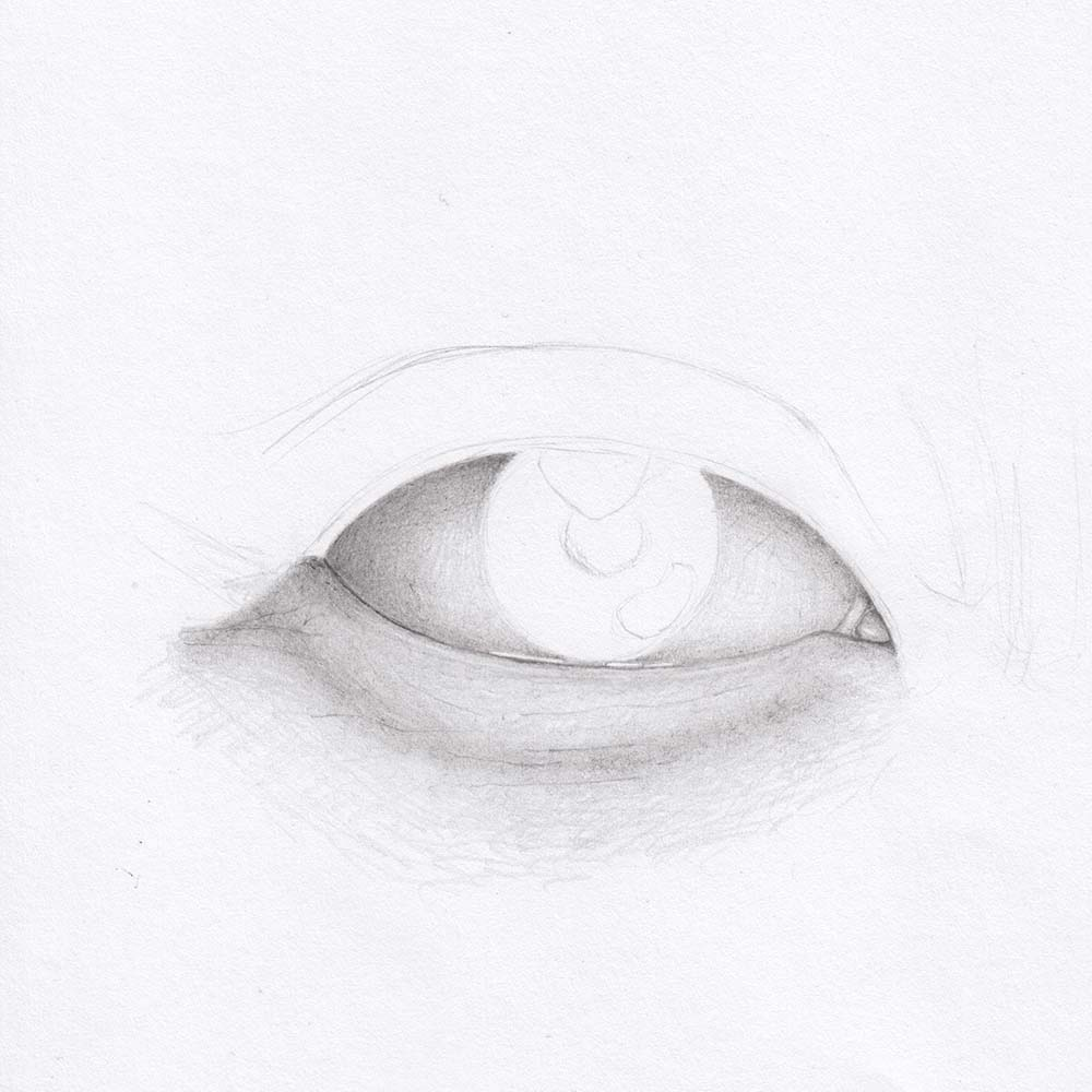 Draw eye from front - lower eyelid
