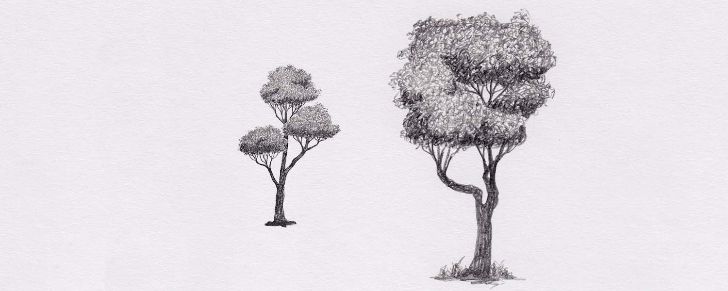 How to draw a tree – the easy way