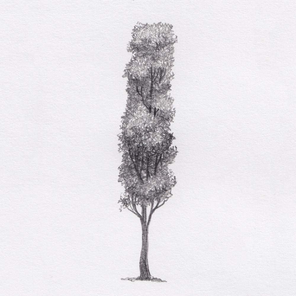 Long tree pencil drawing