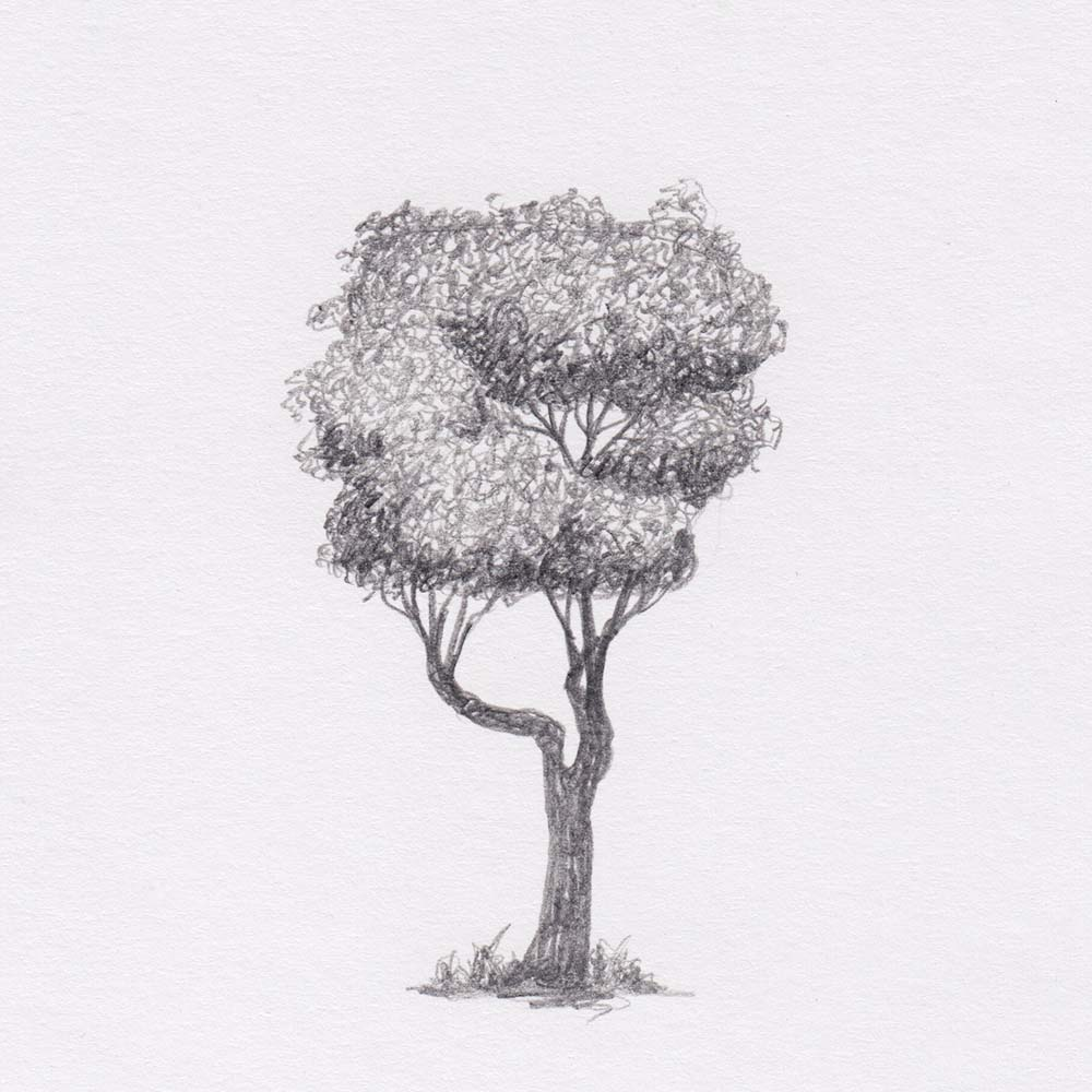 Square tree pencil drawing