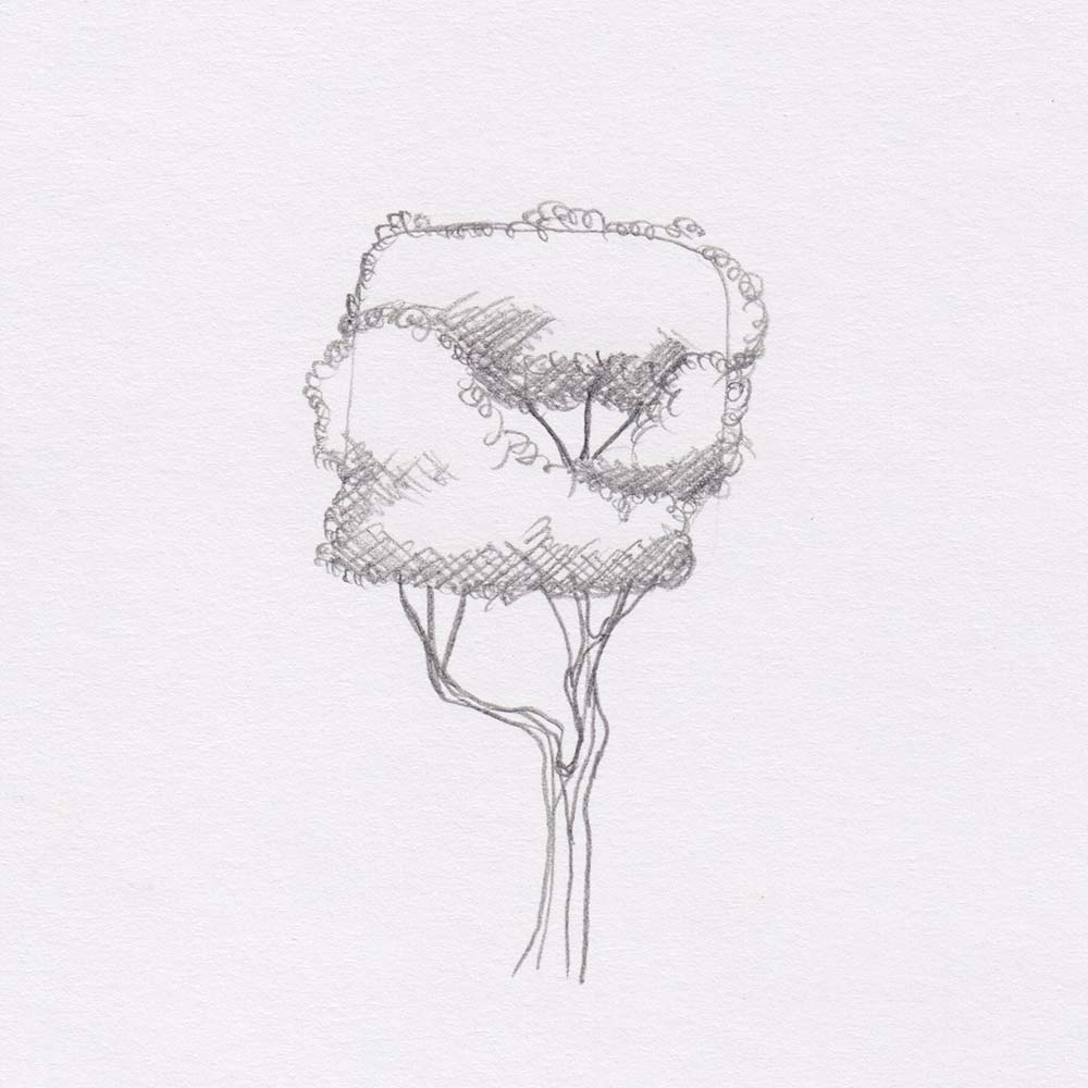 Square tree sketch