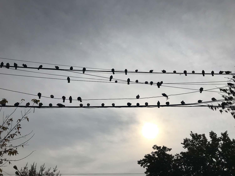 Foto von Weltreise: Vögel auf Kabeln