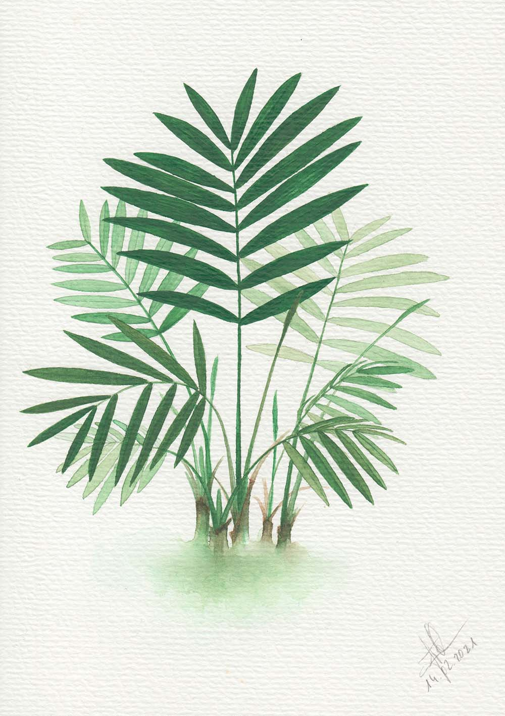 Parlor Palm Watercolor Painting