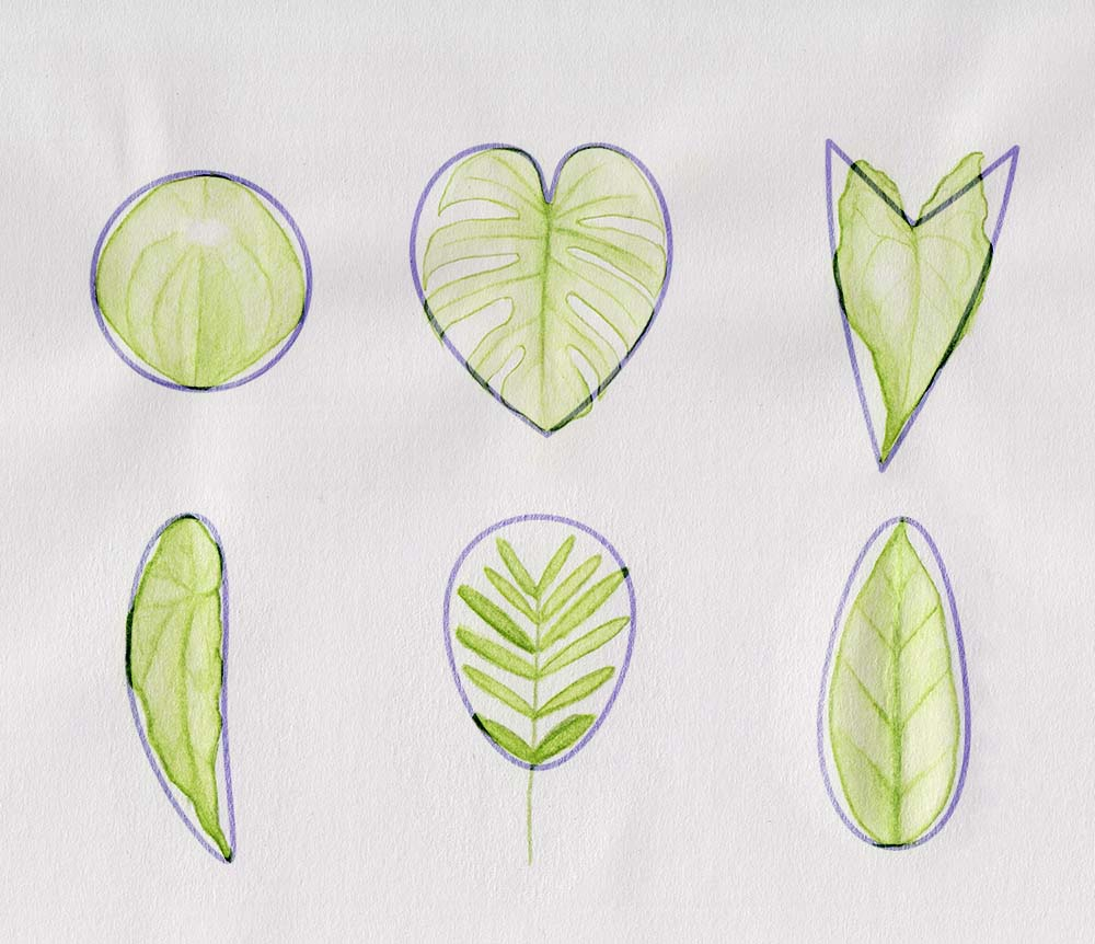Draw different shapes of leaves: Monstera, Syngonium, etc.