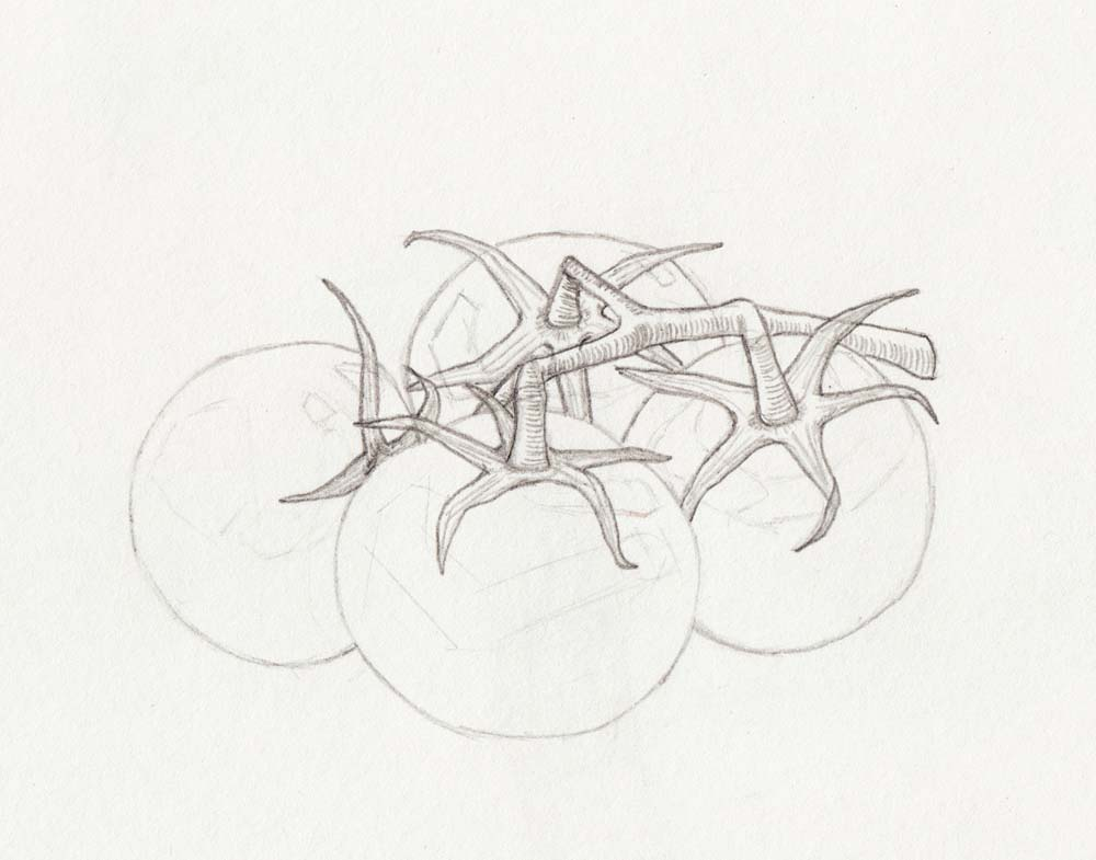 Skizze zeichnen Tomate