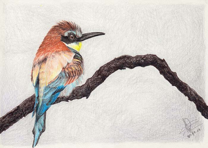 Colored pencil drawing of a European bee-eater